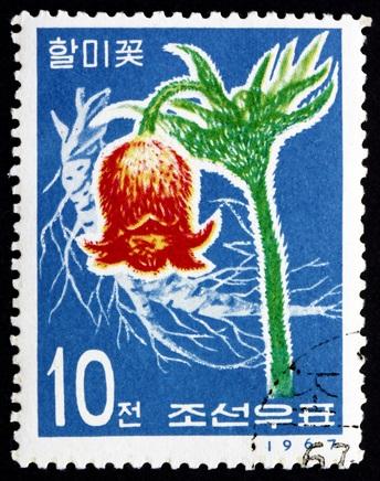 Postage stamp North Korea 1967 Korean Pasque Flower ©clipdeaer 2358084