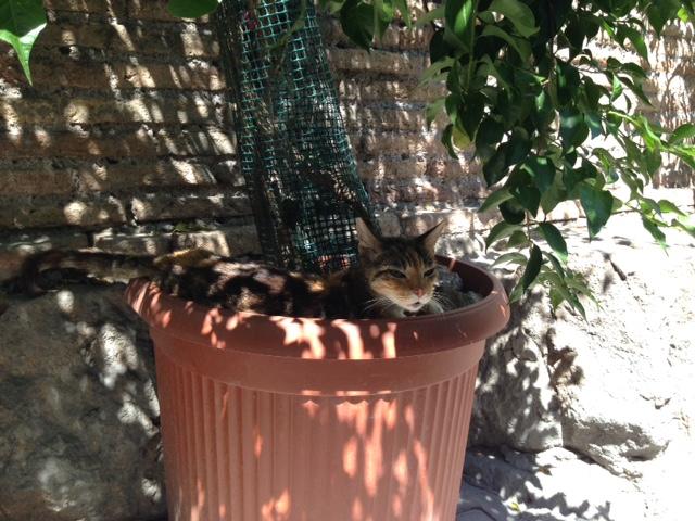 Römischer Katzenschatten