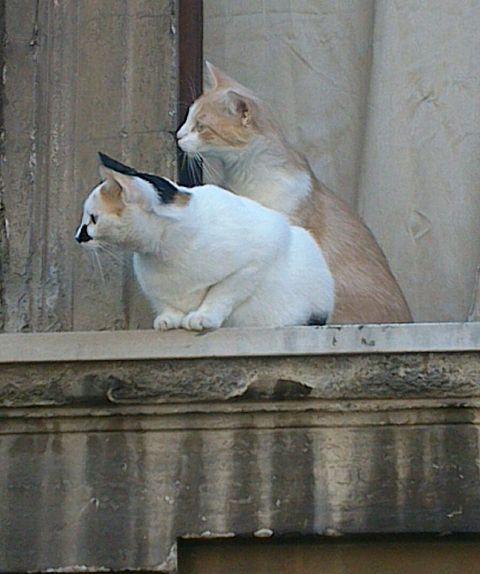 Römische Katzentatzen