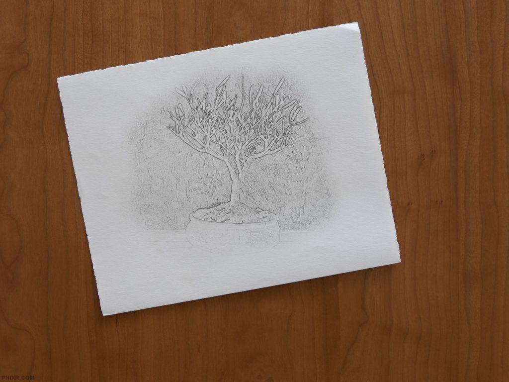 Olivenölbaum in Opaque